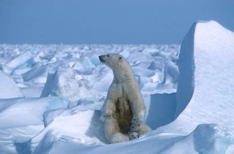 The Arctic National Wildlife Refuge is home to polar bears such as this one, photographed on sea ice northeast of Prudhoe Bay in