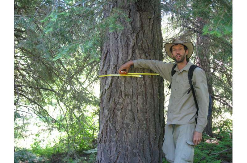 The biggest trees capture the most carbon: Large trees dominate carbon storage in forests