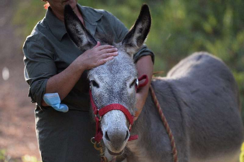 The 'Doctor Donkey' project began in late June as a way of offering respite to stressed-out medics in Spain