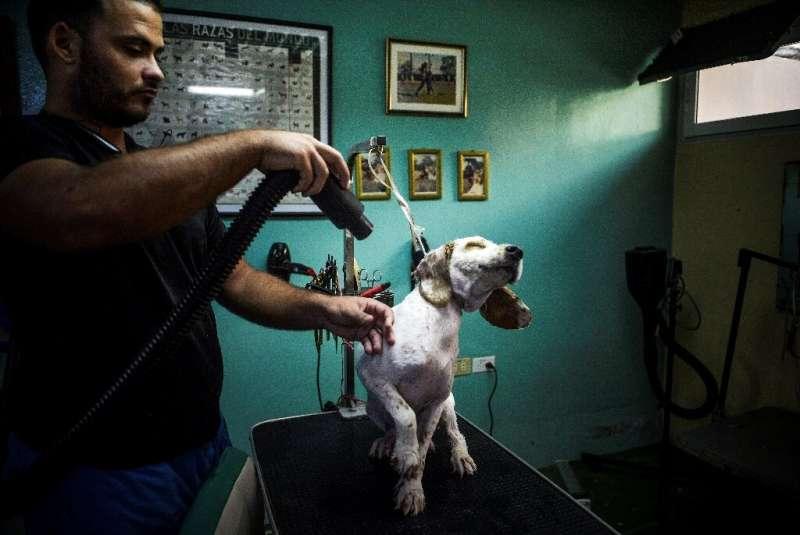 The Don Silver pooch pampering salon in the Santa Fe neighborhood of Havana
