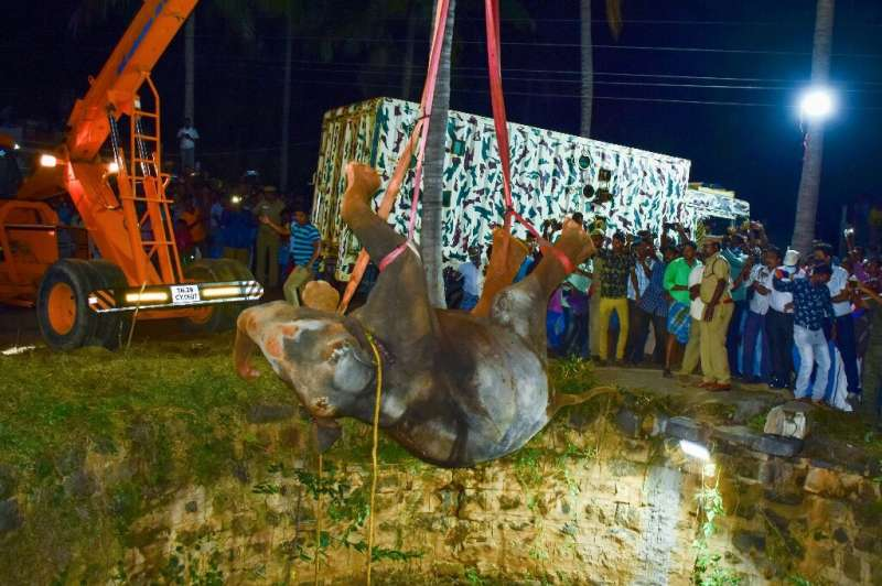 The elephant had fallen some 20 metres (70 feet) into the well, and had to be lifted out with a crane