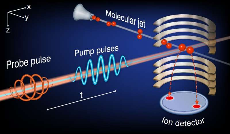 The experimental observation of echoes in a single molecule