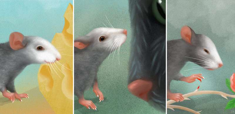 The facial expressions of mice