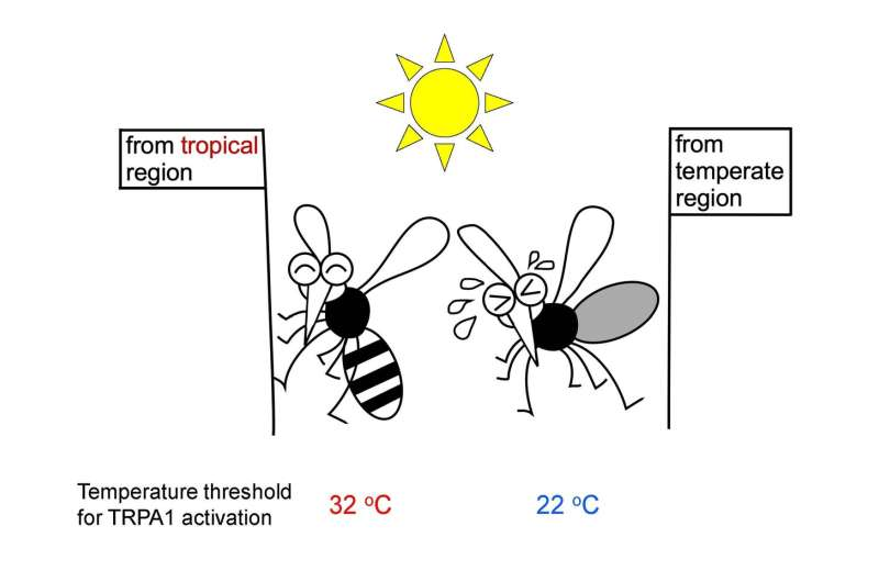 The functional diversity in a noxious heat and chemical sensor among mosquito species