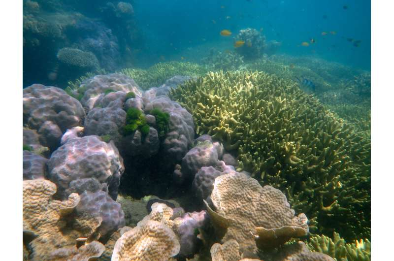 The future is now: Long-term research shows ocean acidification ramping up on the Great Barrier Reef