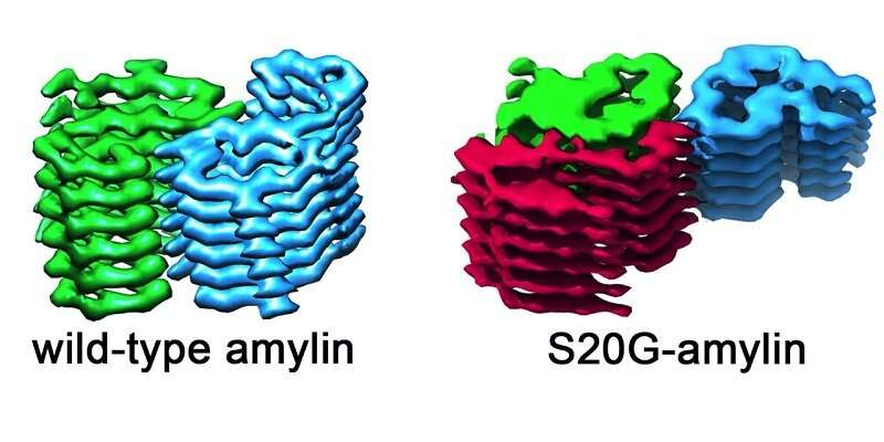 The intricate protein architecture linked to disease