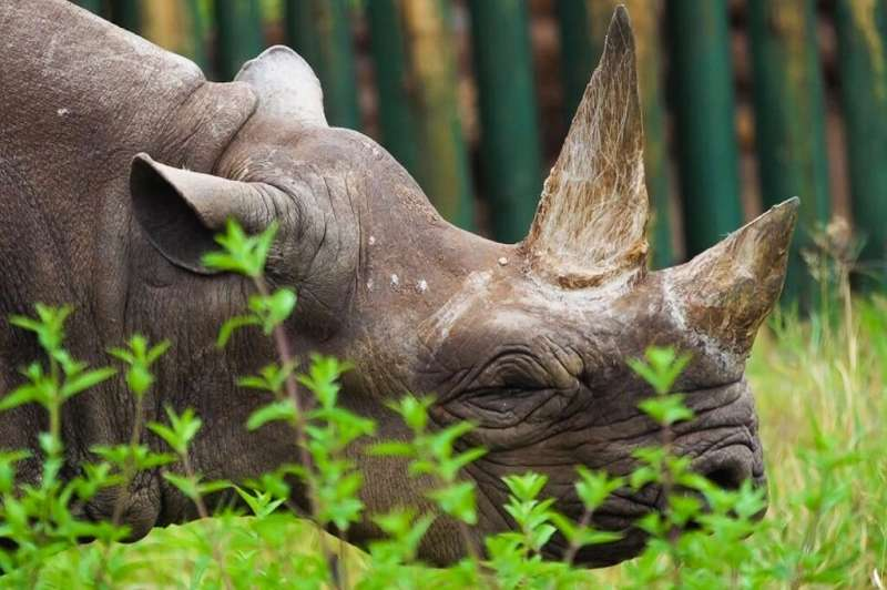 The IUCN identified modest growth in numbers decimated by poaching and illegal trade—this November image released by Ngorongoro