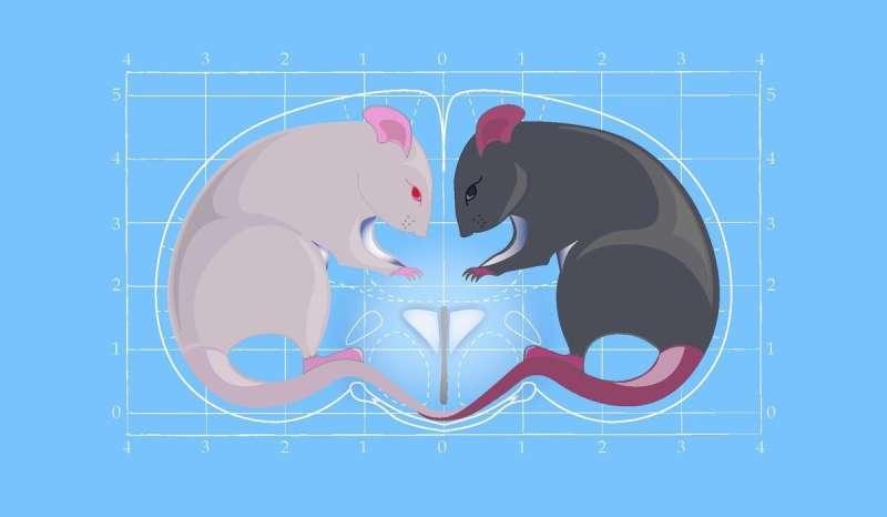 "The ""love hormone"" oxytocin can also give rise to aggressive behavior"