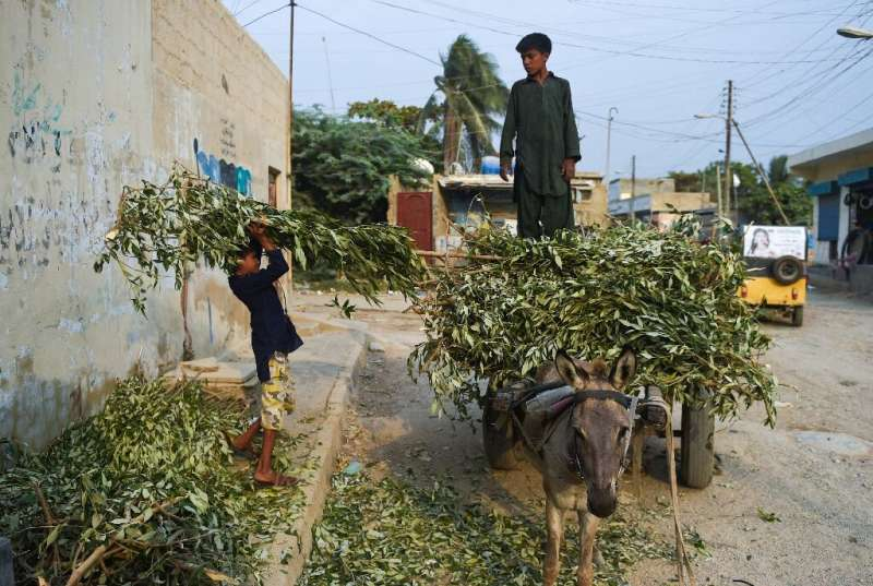 The mangroves are considered an important component of Karachi's environment, which has suffered decades of high pollution and n