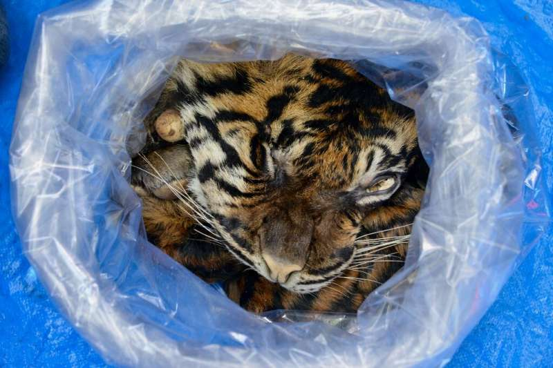 The man offered to sell the tiger skin to an undercover officer posing as a buyer for $6,500