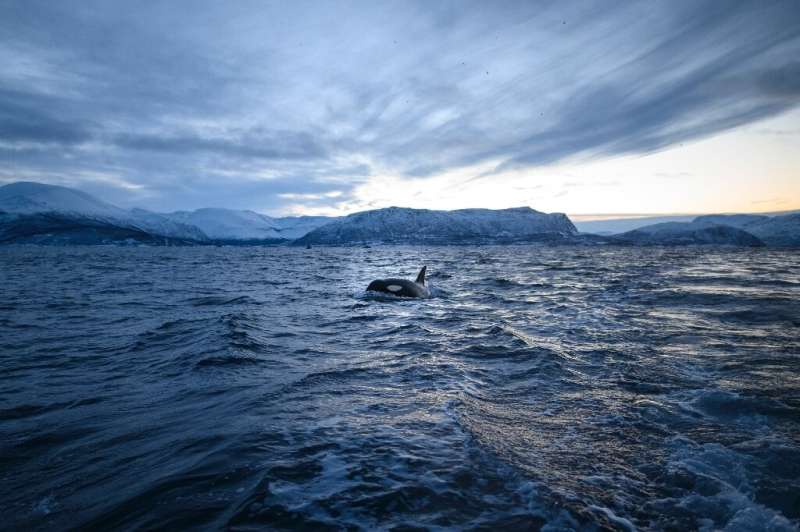 The normally frigid fjords in Norway's Arctic Circle in winter are experiencing temperatures higher than normal this year