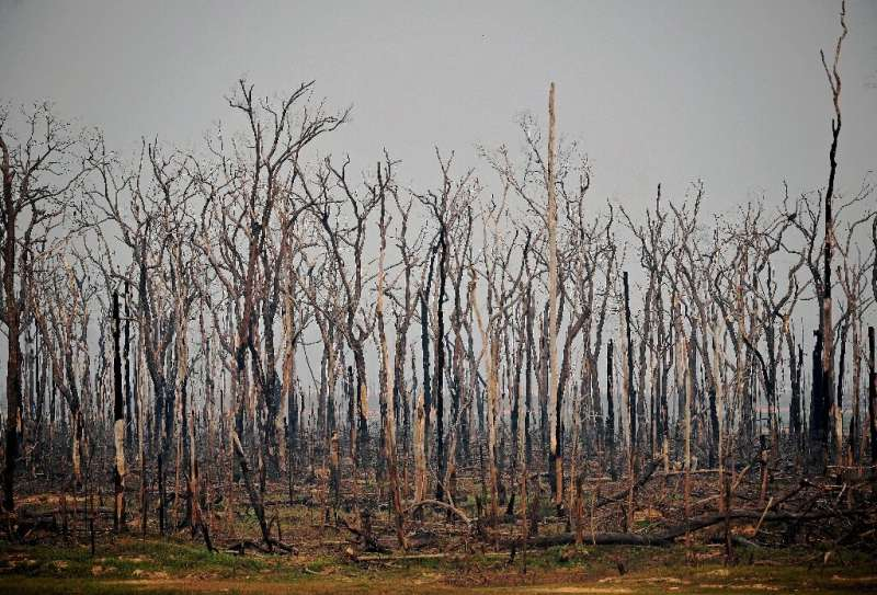 The number of forest fires in the Brazilian Amazon in July 2020 rose 28 percent from the same month a year ago, satellite data s