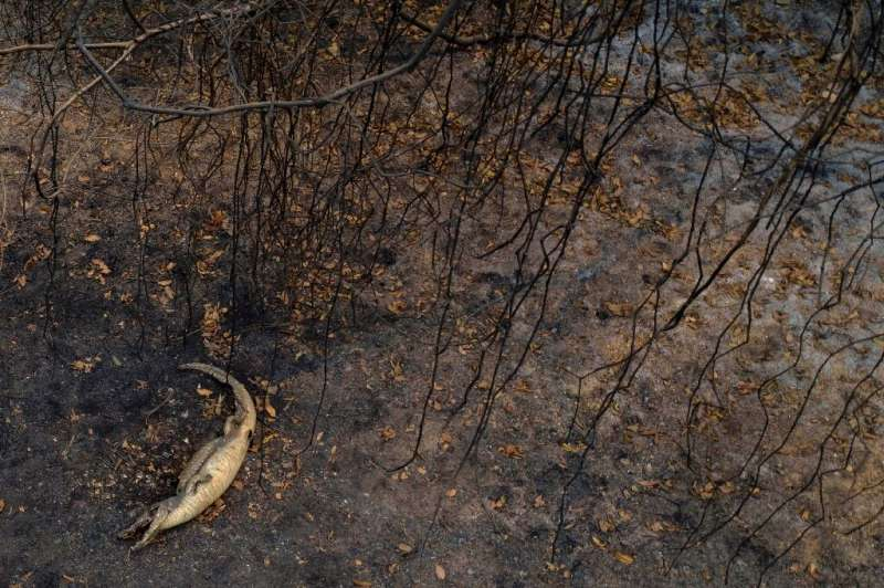 The Pantanal, a region famous for its wildlife, is suffering its worst fires in more than 47 years, destroying vast areas of veg