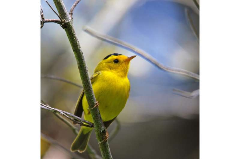 The phantom chorus: birdsong boosts human well-being in protected areas