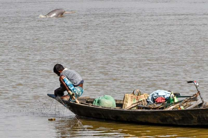 The rare Ganges river dolphin is found in the river systems of Nepal, Bangladesh and India