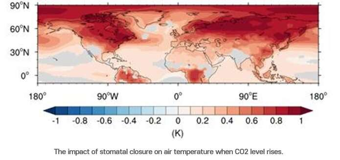 The revolt of the plants: The arctic melts when plants stop breathing