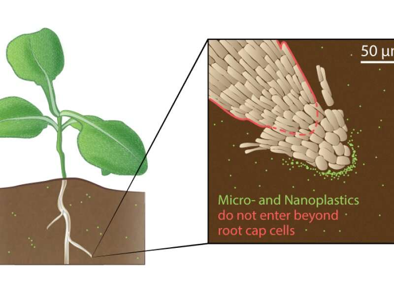 The root of microplastics in plants