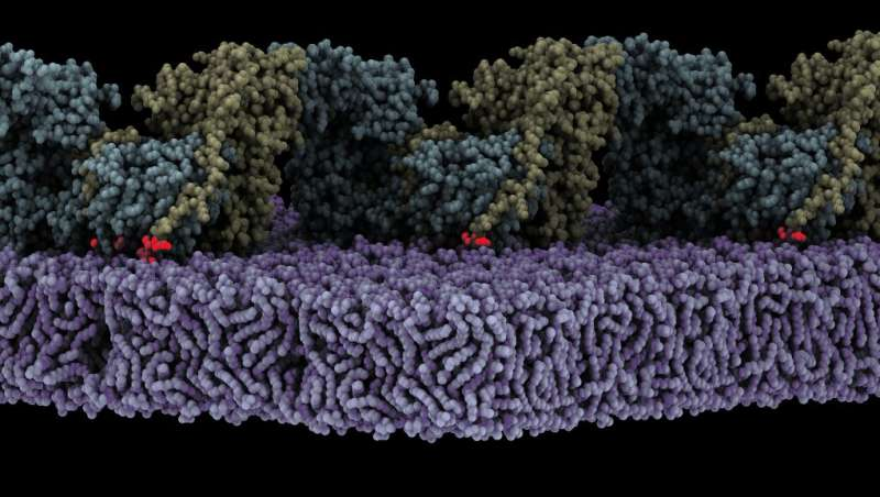 The structural basis of Focal Adhesion Kinase activation on lipid membranes unravelled