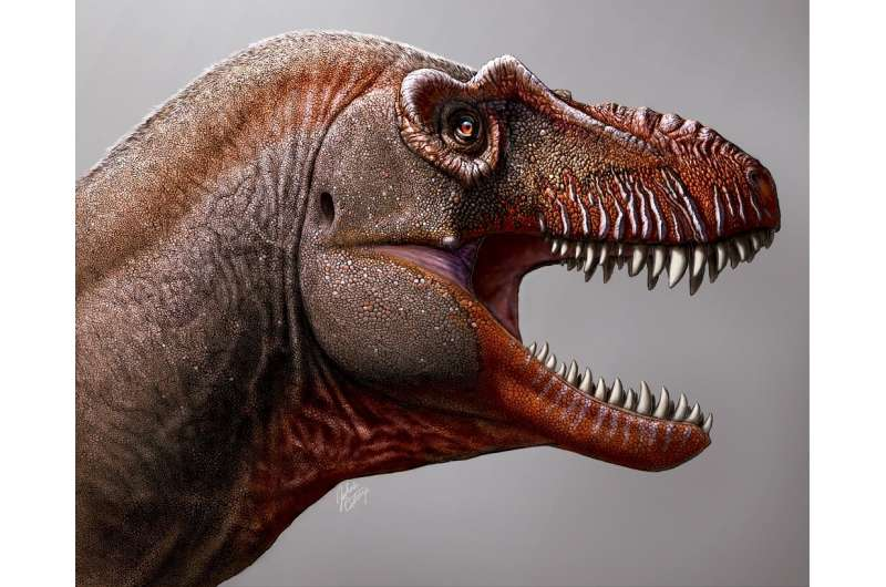 The study found that Thanatos had a long, deep snout, similar to more primitive tyrannosaurs that lived in the southern United S