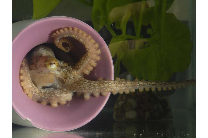 The wily octopus: king of flexibility