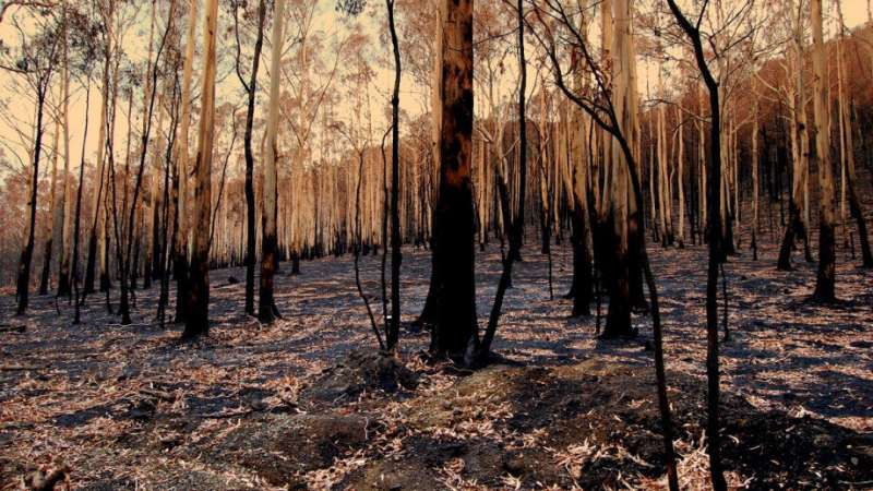 Thinning forests no defence against fires