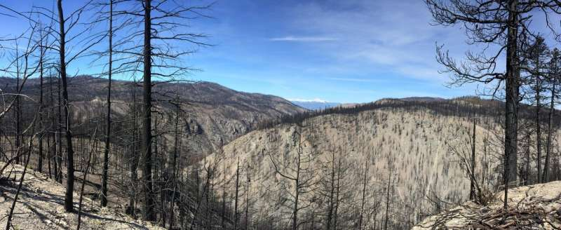 Thinning, prescribed burns protected forests during the massive Carlton Complex wildfire