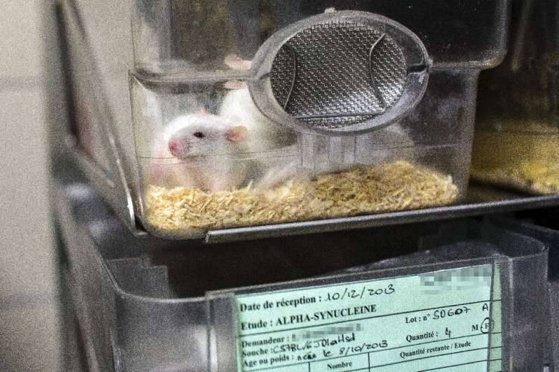 This picture shows mice in a box at the Neurosciences rechearch Center CERMEP in Bron, France in 2014