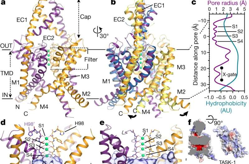 Three-dimensional molecular structure of TASK channel described