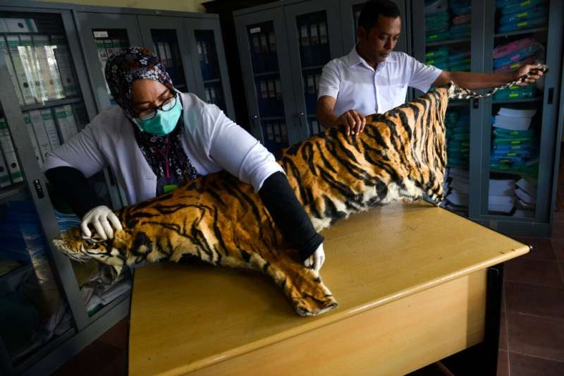 Tigers—thought to number just 22 in Myanmar—can now be bred for their meat and skin
