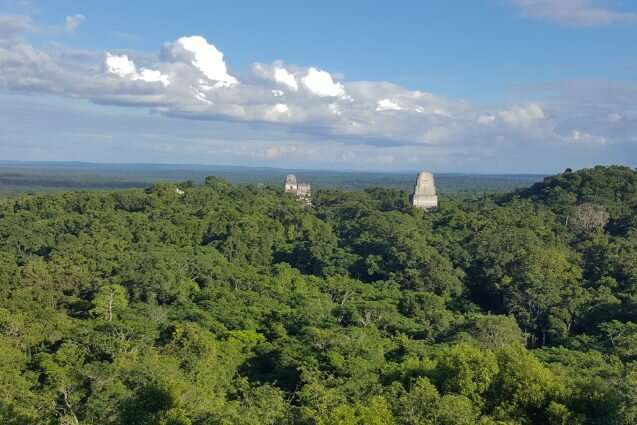 To preserve tropical forests, empower local communities
