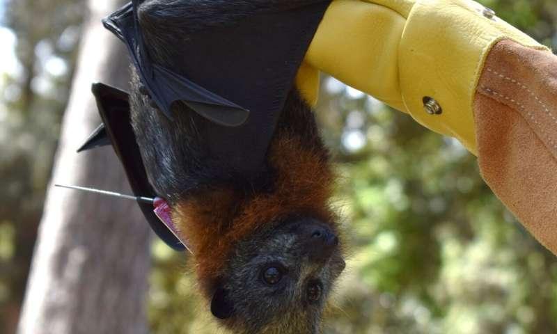 Toxic pollutants can impact wildlife disease spread