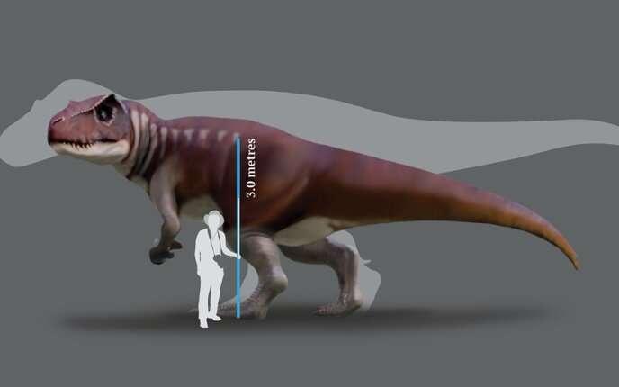 Tracking Australia's gigantic carnivorous dinosaurs