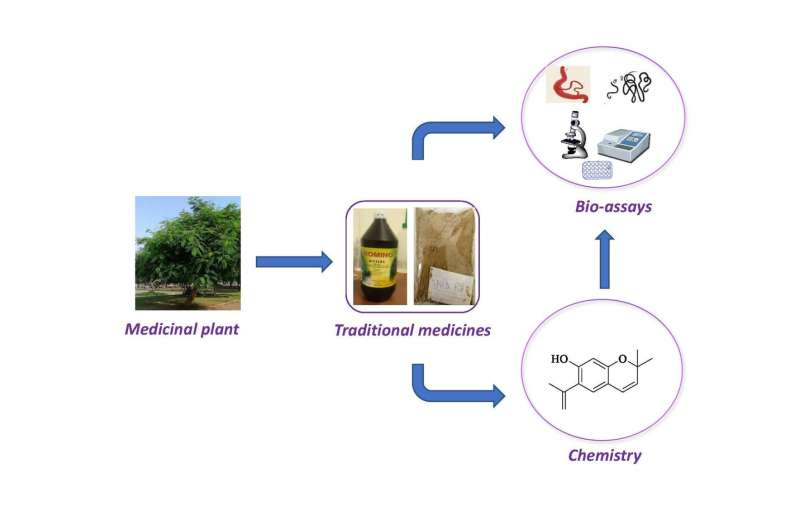 Traditional Ghanaian medicines show promise against tropical diseases