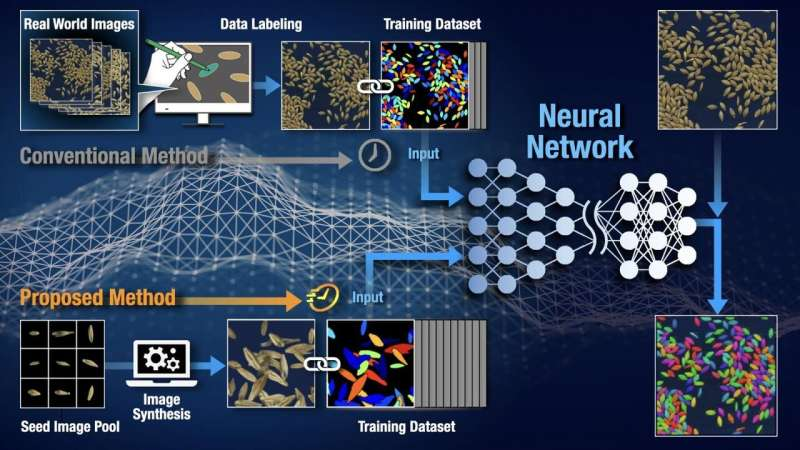 Training instance segmentation neural network with synthetic datasets for seed phenotyping