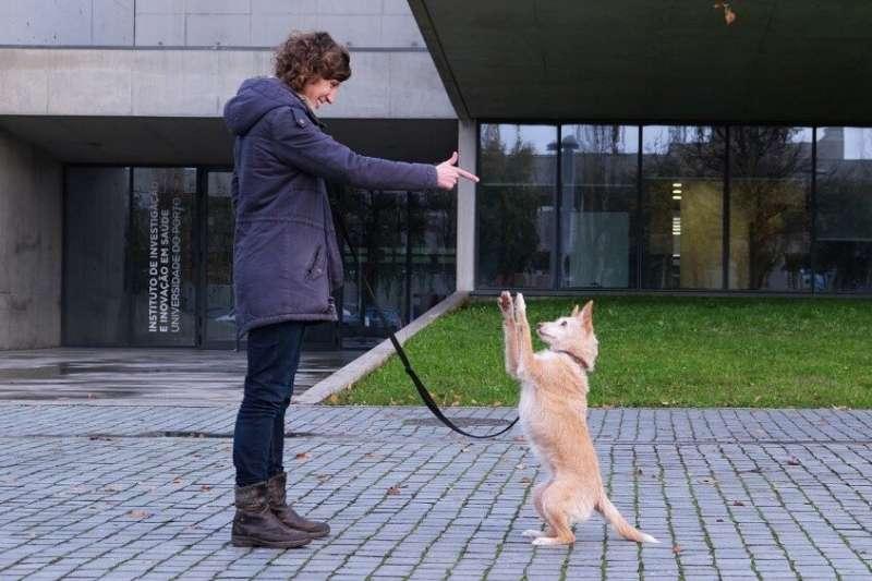 Training methods based on punishment compromise dog welfare
