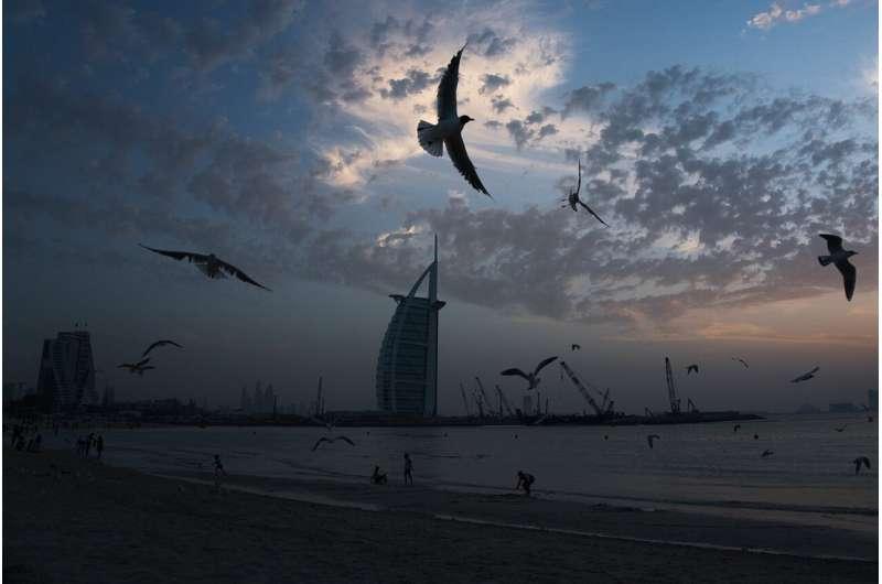Travel hub UAE to halt flights as virus reaches Gaza, Syria