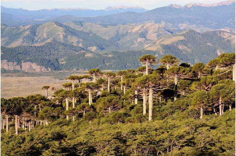 Tree rings show unprecedented rise in extreme weather in South America