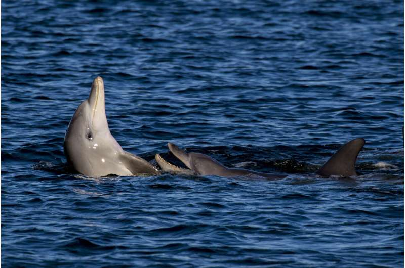 Tuning into dolphin chatter could boost conservation efforts