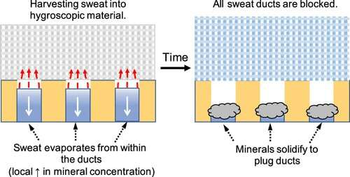 Turning sweat against itself with a metal-free antiperspirant