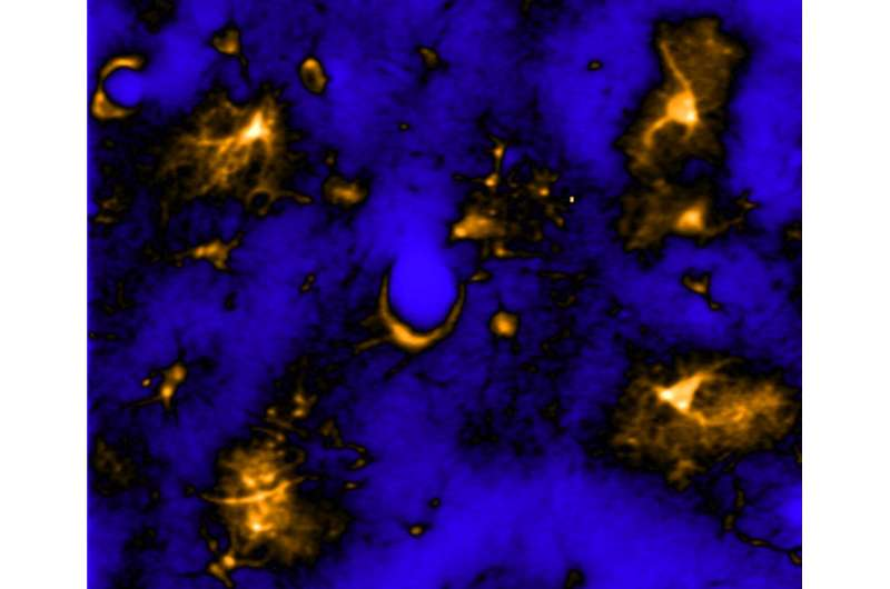 Twinkling, star-shaped brain cells may hold the key to why, how we sleep