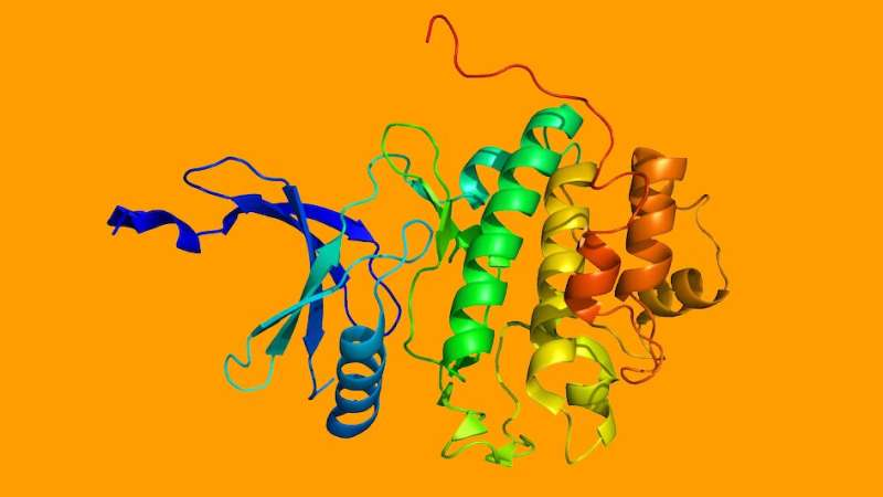 Two-pronged attack on DNA repair could kill drug-resistant cancers