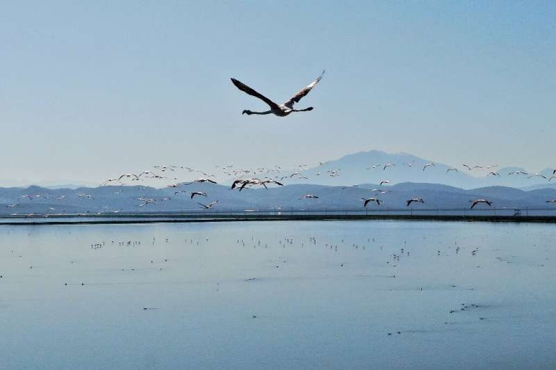 Unchecked urbanisation, a growing tourism footprint and industrial activity have threatened flamingo ecosystems in Albania in re