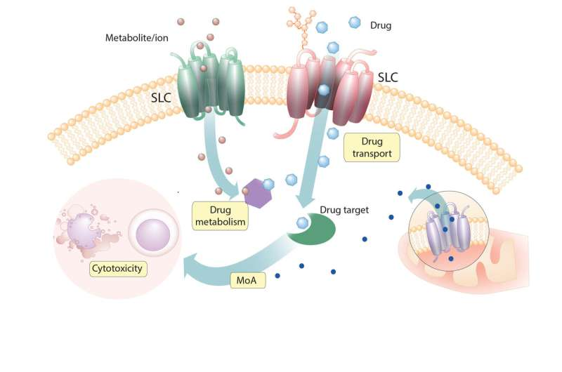 Uncovering novel relationships between SLCs and cytotoxic drugs in human cells