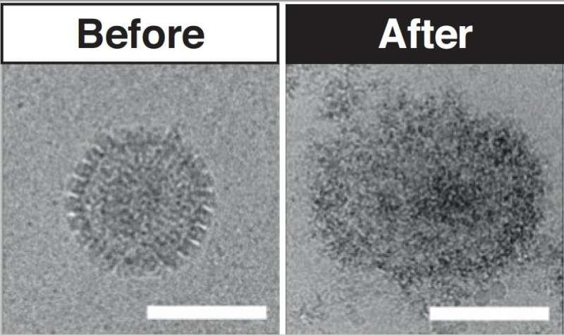Unique new antiviral treatment made using sugar