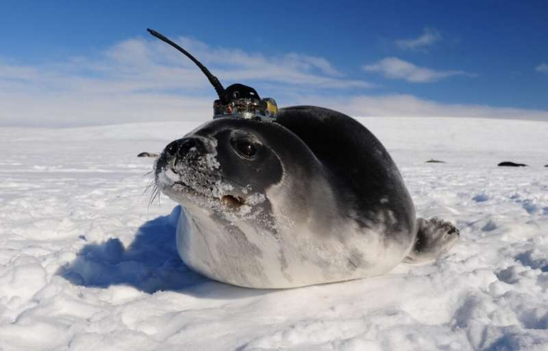 **Unknown currents in Southern Ocean have been observed with help of seals