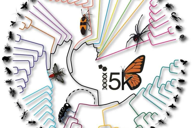 Unravelling arthropod genomic diversity over 500 million years of evolution