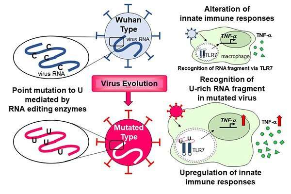 Uracil switch in SARS-CoV-2 genome alters innate immune responses