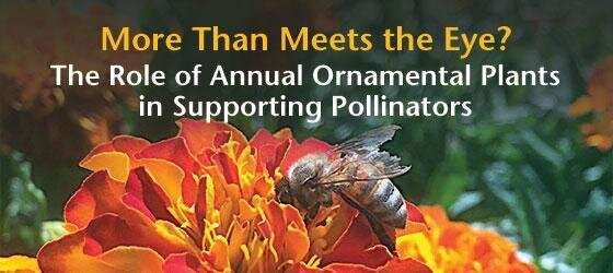 Urban green spaces can help pollinators -- new research provides basic recommendations