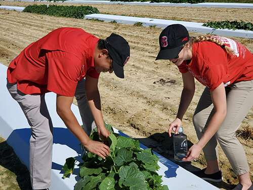 User-friendly cucurbit downy mildew diagnosis guide suited for both experts and beginners