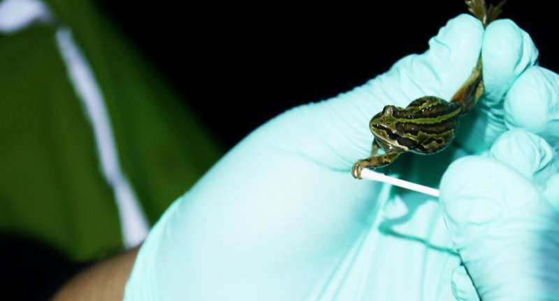 Using environmental DNA to help stop frogs from croaking it